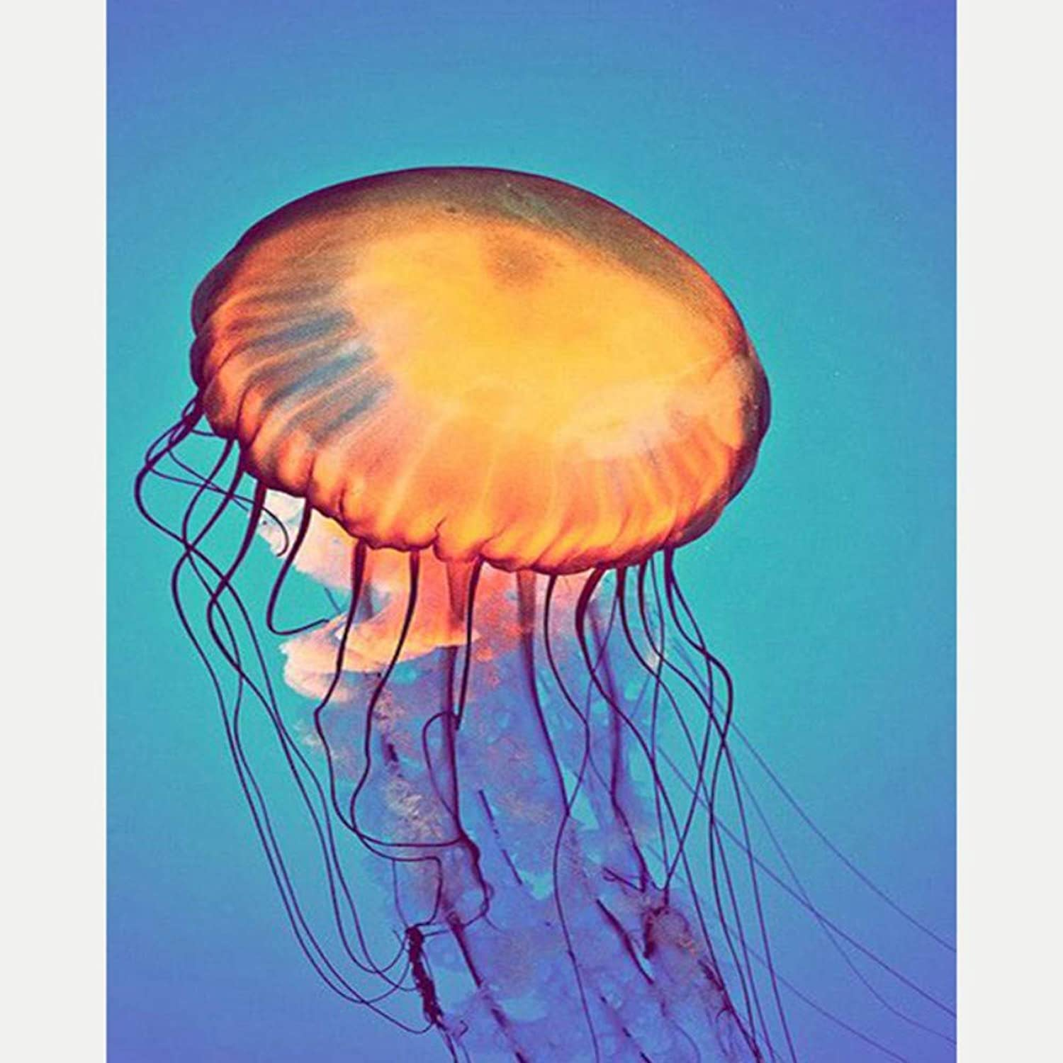 Paint by Numbers for Senior Junior Beginner Level Painting by Numbers Set Jelly Fish with Brushes Paints and Canvas Home Decor 16X20 Inch