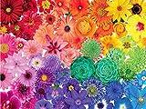 EACHHAHA 1000 Piezas Puzzle,Flor Arcoiris Puzzles para Adultos, 70x50CM,Rompecabezas de Piso Juego de Rompecabezas y Juego Familiar
