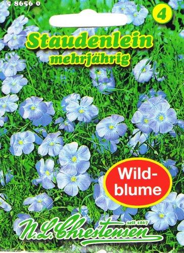Staudenlein \'Linum perenne \' Lein mehrjährig Staude Wildblumen Schnittblume