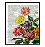 Dahlias Nature Dictionary Wall Art Print - Ready to Frame (8X10) Vintage Photo - Steampunk - Great For Home Decor, Flower Lovers and Easy Gift Giving - Perfect Present for Florists and Flower Shops