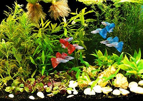 Zoomeister - Pflanzen-Set Guppy bis 60L- für Lebendgebärende & hartes Wasser