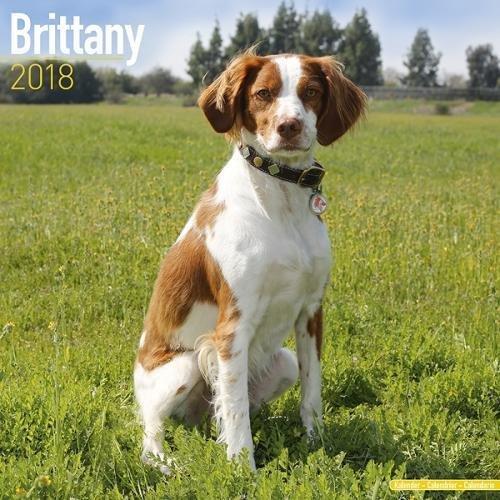 Brittany Calendar - Brittany Dog Calendar - Brittany Spaniel Calendar - Dog Breed Calendars 2018 - Dog Calendar - Calendars 2017 - 2018 wall calendars - 16 Month Wall Calendar by Avonside