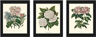 Botanical Set of 3 Prints Antique Beautiful White Pink Blue Hydrangea Plant Flowers Home Room Decor Wall Art Unframed