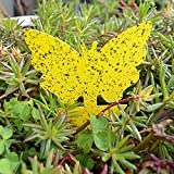 LBHH Trampas de Mosca 50 Piezas Trampas para Insectos Trampa para Insectos voladores Trampas de Mosca pegajosas Double-Sided Yellow Sticky Insect Board Butterfly Potted Insect Trap Board Insect Trap