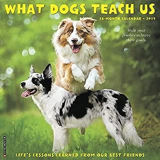 What Dogs Teach Us 2019 Wall Calendar
