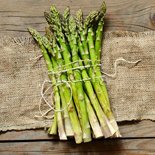 SOW PERFECT Creative Farmer Herbal Plants For Growing - Asparagus - Native To Northern Africa Kitchen Garden Pack
