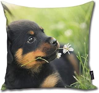 Best cute baby rottweiler puppies Reviews