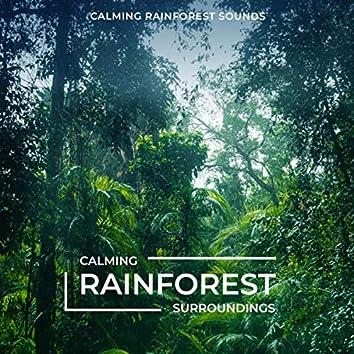 Calming Rainforest Surroundings