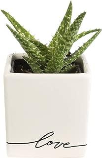 Costa Farms Live Mini Aloe Plant, Grower's Choice, in Love Balloon Ceramic