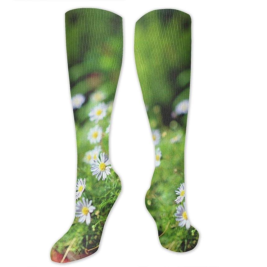 リビジョン宿るその靴下,ストッキング,野生のジョーカー,実際,秋の本質,冬必須,サマーウェア&RBXAA Roadside Flowerbed Small Daisies Socks Women's Winter Cotton Long Tube Socks Cotton Solid & Patterned Dress Socks
