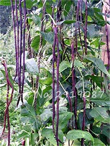 Vente Promotion! 5 Pcs mixte Graines long haricot Très facile d'intérêt Mini Garden Or Crochet légumes biologiques en santé Graden Plantes 20