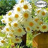 getso genuine 200 pc/sacchetto profumato camomilla chrythemum bonsai casa giardino bonsai piante fiori facile da coltivare bs: come esposizione