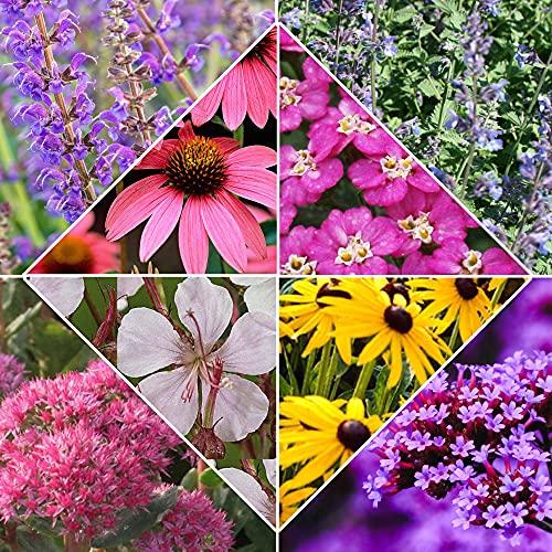 8x Pflanzen für Garten 'Desert Flowers'...