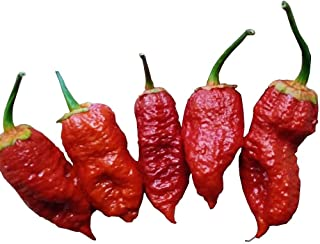 Best bubblegum chilli pepper Reviews