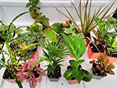 Terrarium plants the variety of the season 8 plants in 2.5 pots (Is Approximately 4 to 6 Inches Height of the Plant) Create your own terrarium it will take like 10-15 minutes. Included instructions of caring