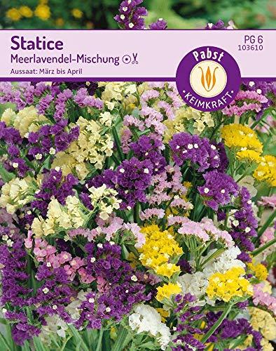 Carl Pabst 103610 Statice Meerlavendel-Mischung (Lavendelsamen)
