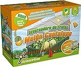 Science4you - Invernadero de Frutas: Melón Cantalupo - Juguete Educativo y Científico