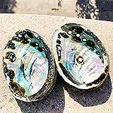 LIRRUI Variación 10-12 cm Abalone Shell Natural Seashell Náutico Playa Negro Manchas Artesanía Espécimen Coleccionables (Color : Natural, Size : 12 13cm)