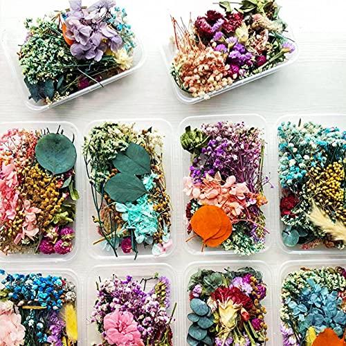 2PCS Flores Prensadas Secas,Flores Prensadas,Flores Prensadas Secas Naturales Mezcladas Múltiples,para Hacer Velas,Manualidades,...
