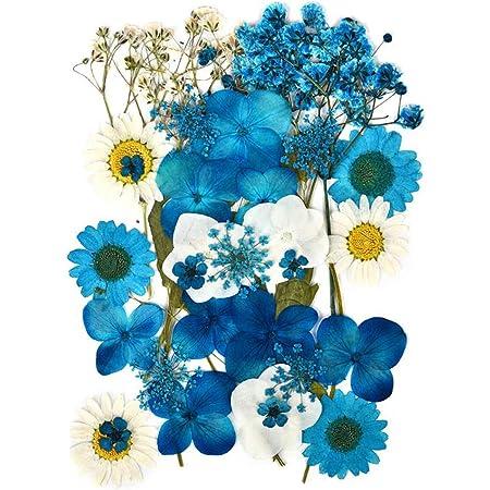 Fleurs Séchées Pressées Naturelles pour Scrapbooking Artisanat Pressé Fleur Décoratives Mixtes Neuf Styles pour Bricolage Art Décorations Florales Décors (Bleu)