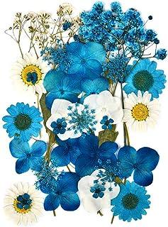 Fleurs Séchées Pressées Naturelles pour Scrapbooking Artisanat Pressé Fleur Décoratives Mixtes Neuf Styles pour Bricolage ...