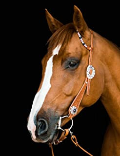 Quarter Horse Composition Notebook: College-Ruled Notebook, Journal, For School, Work, Students, Teachers, Horse Lovers