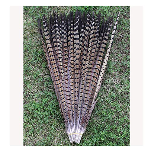 BulzEU 10Pcs Pheasant Tail Feathers for Craft or Decoration