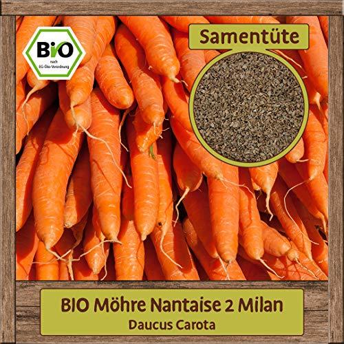 Samenliebe BIO Möhre Samen Nantaise 2 Milan (Daucus Carota) Gemüsesamen Saatgut süß orange Karottensamen Karotten für 250 Pflanzen