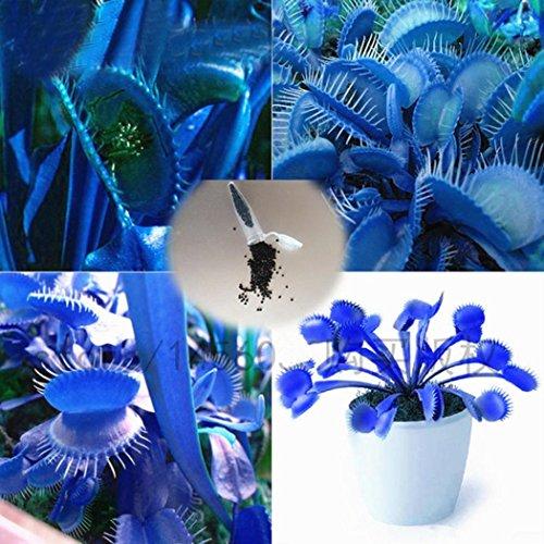Soteer Garten - 50 Stück Venusfliegenfalle Samen Fleischfressende Pflanzen Samen Dionaea muscipula Seeds Flytrap Seeds winterhart