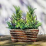 Dekoleidenschaft Pflanzkorb aus Rattan, bepflanzt mit künstlichen Pflanzen Erika, Koniferen, Eukalyptus, Blumenkasten, Balkonkasten