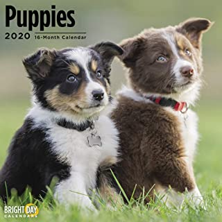 2020 Puppies 16 Month 12 x 12 Wall Calendar by Bright Day Calendars
