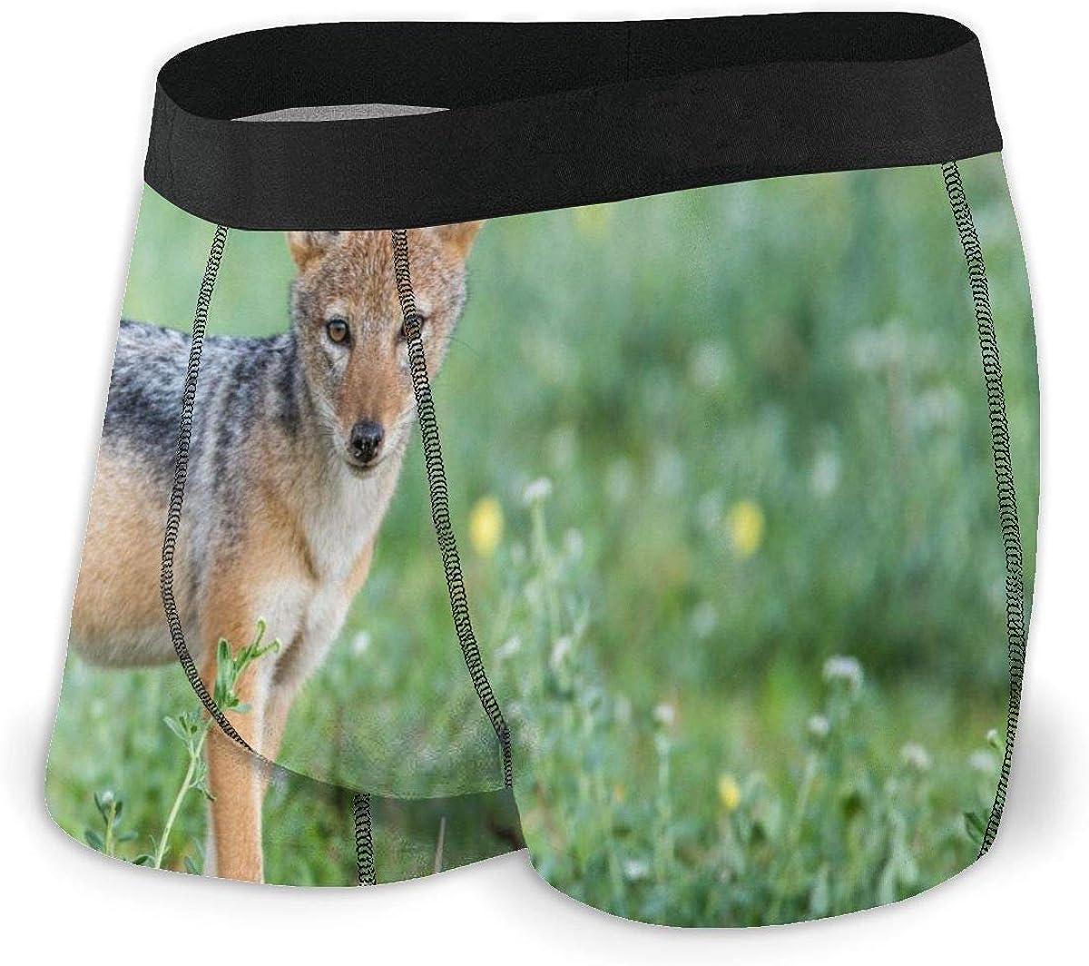 Randolph Wordsworth Mens Boxer Briefs Tropical Jackal Pup Low Rise Trunks Breathable Bikini Underpants Boys Underwear