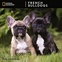 2020 French Bulldogs National Geographic Wall Calendar, by Zebra Publishing