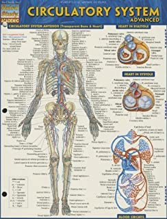 Circulatory System Advanced (Quick Study: Academic) by BarCharts, Inc. (July 31, 2013) Pamphlet