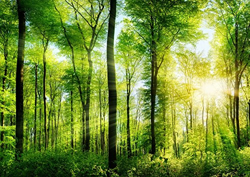 絵画風 壁紙ポスター (はがせるシール式) 森林 森林浴 日光浴 陽射し 太陽 眩しい 緑の森の木々 癒し キャラクロ SNR-030A1 (A1版 830mm×585mm) 建築用壁紙+耐候性塗料