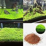 Quanjucheer Semillas de acuario para plantas acuáticas, plantas de primer plano