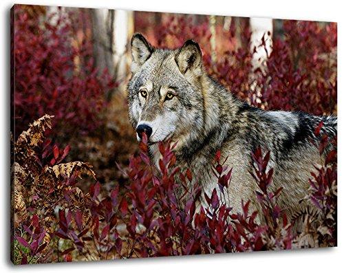 gray wolf Format 120x80 cm Bild auf Leinwand, XXL riesige Bilder fertig gerahmt mit Keilrahmen, Kunstdruck auf Wandbild mit Rahmen