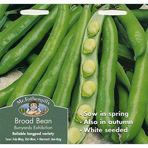 Exposition Broad Bean Bunyards - Graines de M. Fothergill