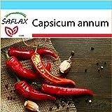 SAFLAX - Set regalo - Chile de cayenne - 20 semillas - Con caja regalo/envío, etiqueta para envío, tarjeta de felicitación y sustrato de cultivo y fertilizante - Capsicum annum