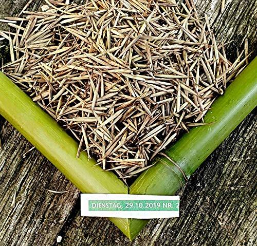 100 Moso Bambus Samen, Phyllostachys pubescens, frischer Direktimport Oktober 2019