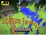 Clip: How To Grow Sugar Cane 7
