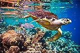 Schildkröte Fische Meer Wasser XXL Wandbild Foto Poster
