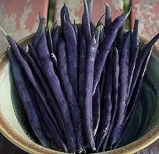 David's Garden Seeds Bean Pole Blue Coco SL8202 (Purple) 100 Non-GMO, Heirloom Seeds