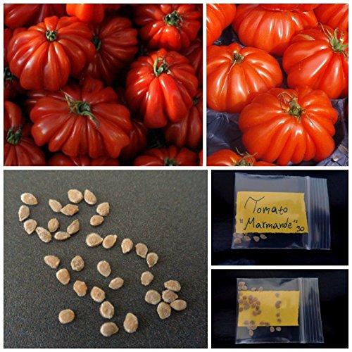 « Graines rares Tomate « » Marmande » ~ 30 TOP Graines Qualité