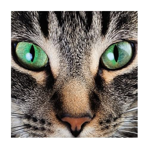 Carte Blanche 3D Holographic Card Cat Up Close