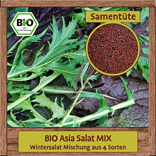 Samenliebe BIO Gemüse Samen Salat Mix (Wintersalat Mischung aus 4 Sorten) | BIO Salatsamen Gemüsesamen | BIO Saatgut für 3m²