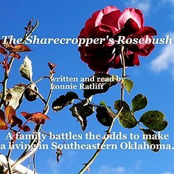 The Sharecropper's Rosebush