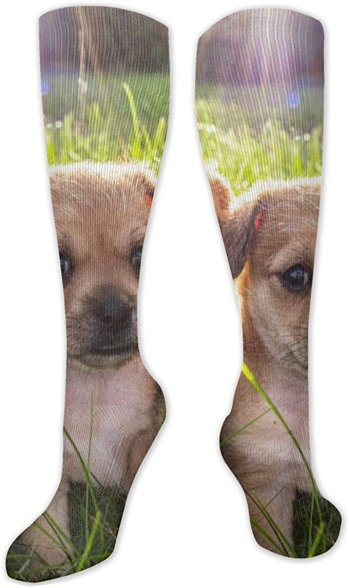 Puppy On The Lawn Knee High Socks Leg Warmer Dresses Long Boot Stockings For Womens Cosplay Daily Wear