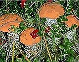 HAO Pintura al óleo de la Imagen de DIY por la Pintura de la decoración de la Pared de los números en la Lona para la Seta casera 40x50cm Sin Marco
