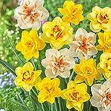 100 Unids/Bolsa Semillas De Narciso Estético Color Multiusos Llamativo Semillas De Flores Para Plantas De Balcón Semillas De Jardín Semillas de narciso